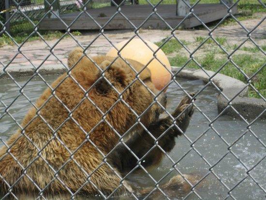 Big Cat Habitat and Gulf Coast Sanctuary : bear