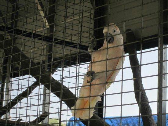 Big Cat Habitat and Gulf Coast Sanctuary : bird
