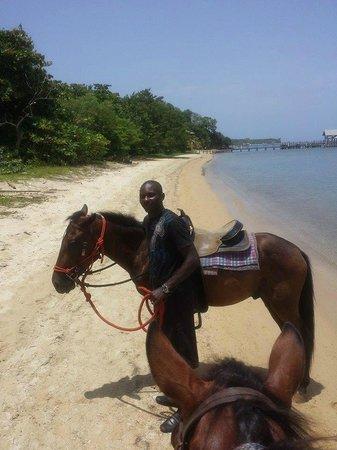 Bodden Tours: Our horseback riding guide