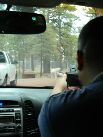 Bearizona Wildlife Park: wolves
