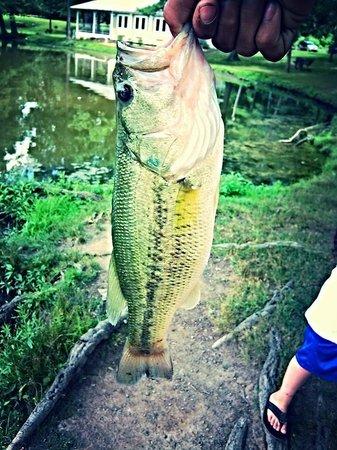 Goodwin Park : bass fishing at goodwin