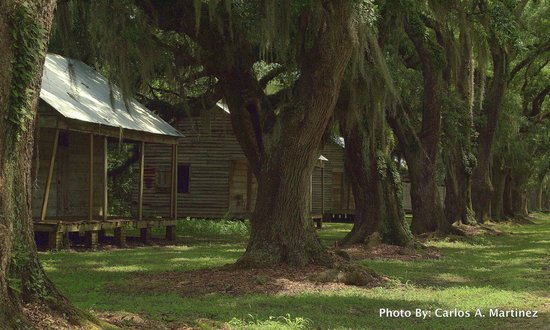 Evergreen Plantation: Slave Cabins