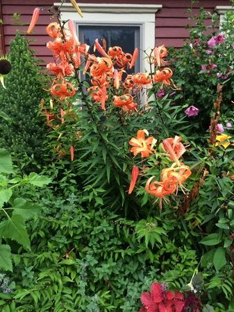 The Wicked Oyster: Wicked Oyster--beautiful garden