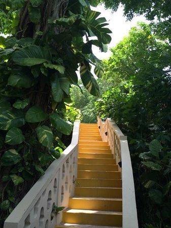Sandals Royal Plantation : lush walkways