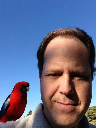 O'Reilly s Green Mountain Tour: A parrot on the shoulder