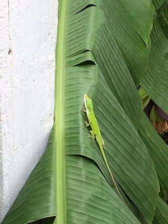 Five Continents Bed and Breakfast: little lizard in the backyard