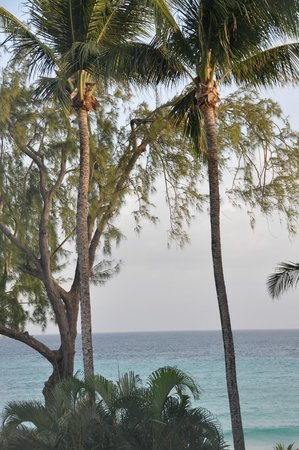 Turtle Beach by Elegant Hotels: View from the room