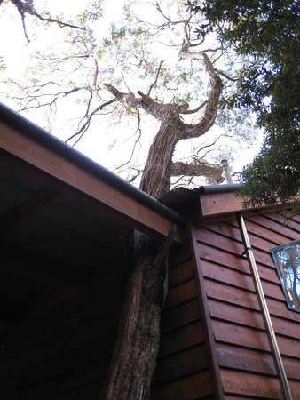 The Mouses House Rainforest Retreat : Cabin with a tree