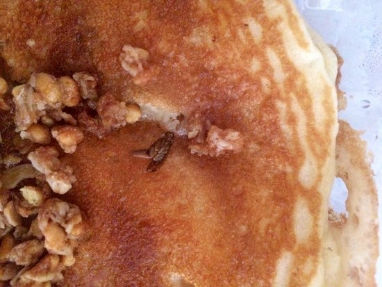 Crackers & Co. Cafe: Cockroach in my pancake