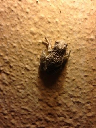 Allegro Cozumel: Evening bug eater on our building son loved him