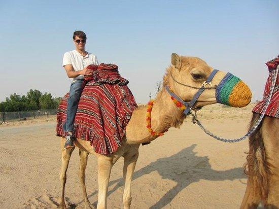 Корабли пустыни Fotograf 237 A De Al Sahra Desert Resort