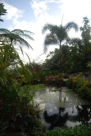 Rainforest Inn: Fabulous View