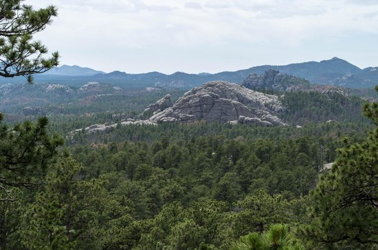 Iron Mountain Road : Scenic Overlook