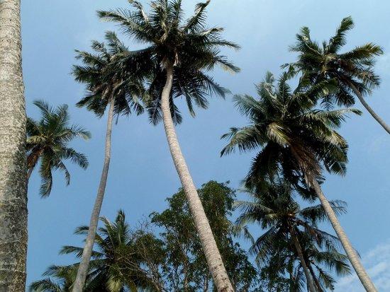 A-Na-Lay Resort Koh Kood: paradise island ;-)