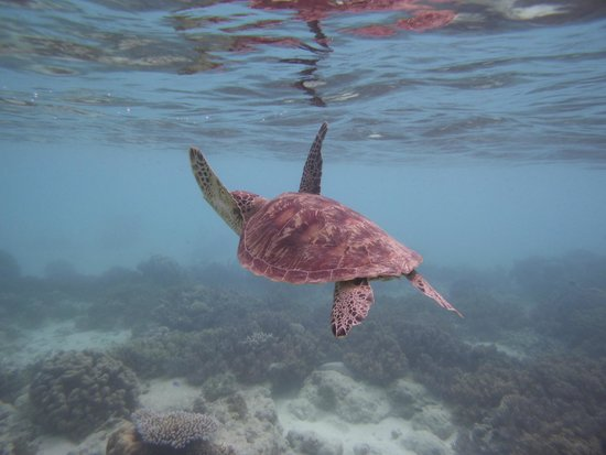 Passions of Paradise Reef Tour : Turtle