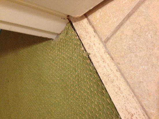 Monumental Hotel Orlando : Old nasty carpet