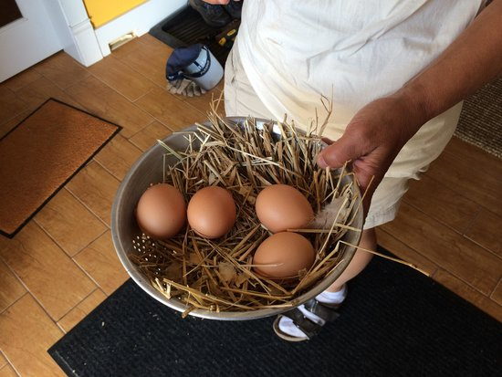 McArras Brook, Canada: Fresh eggs from the inn's henhouse