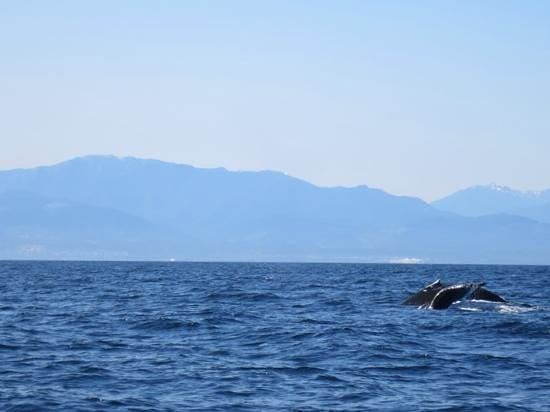 Prince of Whales Whale Watching: mama and baby humpbacks