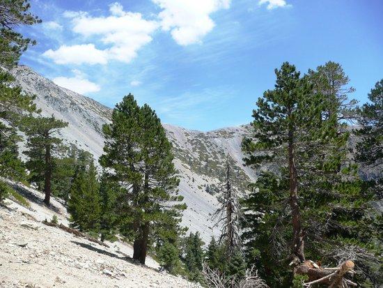 Mt. Baldy Ski Area: More Wow!