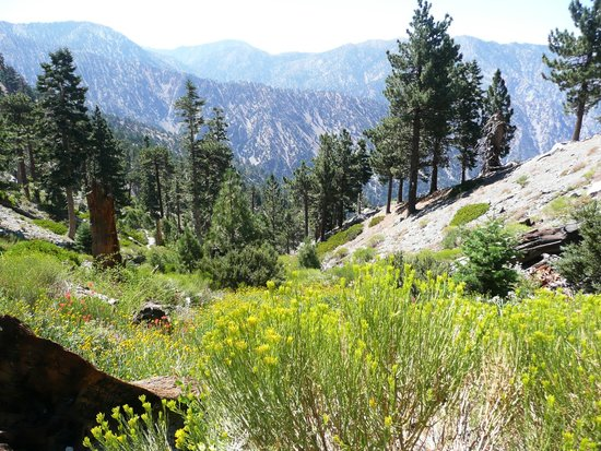 Mt. Baldy Ski Area: Still flowers at end of July, 2014.