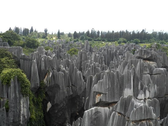 Bosque de Piedra: stone forest view from vantage point