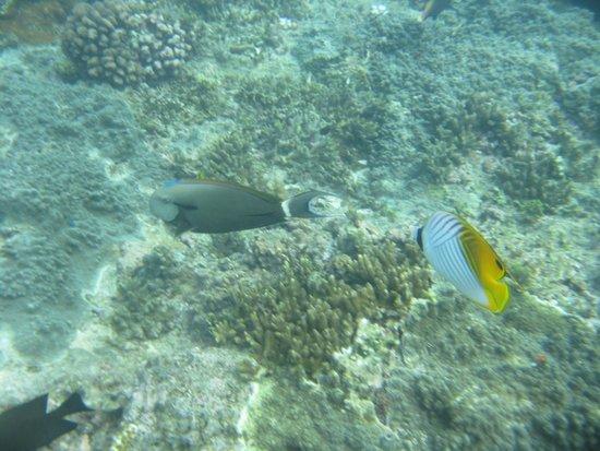 Hideaway Island Resort: beautiful tropical fish