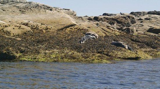 Wildheart Adventures: seal island