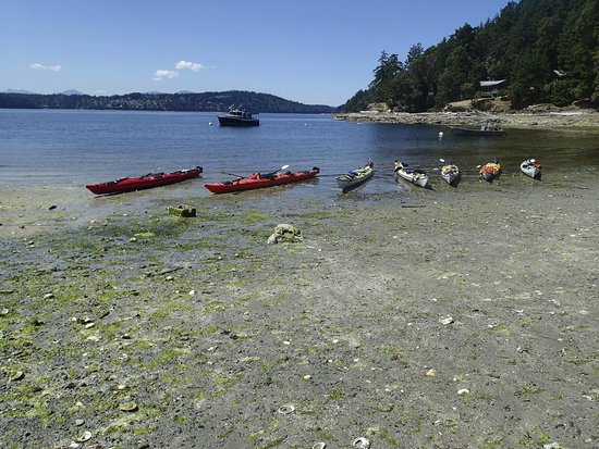 Wildheart Adventures: beached kayaks