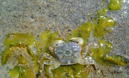 Wildheart Adventures: crab