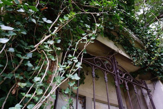 Riverside Cemetery : Ivy covered mausoleums