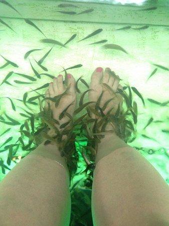 The Old Phuket: Спа рыбками-щекотно