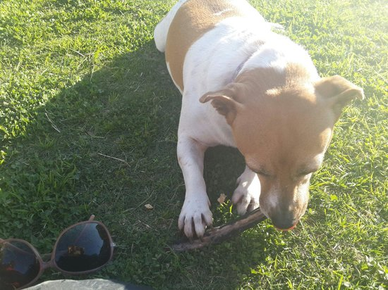 Mountain View Manor Guesthouse, Sandbaai : Dogs are great!!!