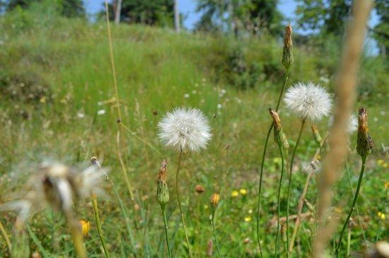 Deodar Manor: Flower beds