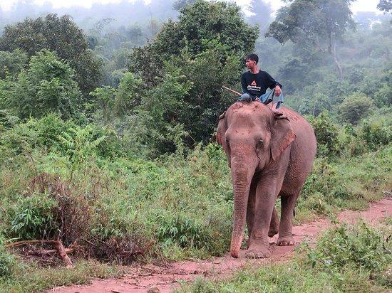Anantara Golden Triangle Elephant Camp & Resort: Elephant sanctury