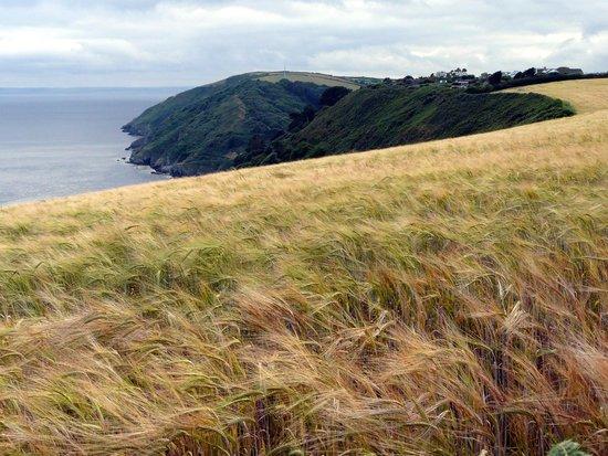 Killigarth Manor Holiday Park : Coastal walk to Polpero