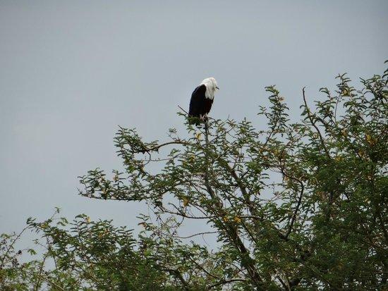 Lake Ziway : l'ile aux oiseaux