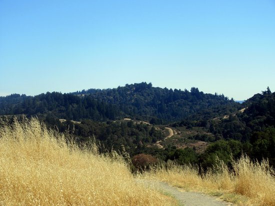 Monte Bello Open Space Preserve, Palo Alto, CA