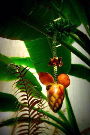 National Botanic Gardens: At Palms house