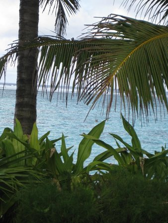 Palm Grove: Following snorkeling husband