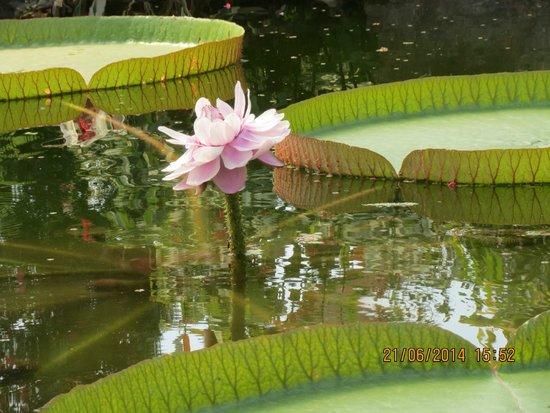 Rotterdam Zoo: waterlelie