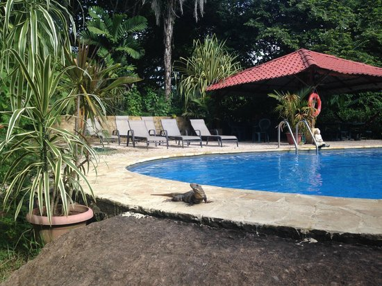 Hotel Casacolores: swimming pool with shower, barbecue, tables, sun beds and Iguanas