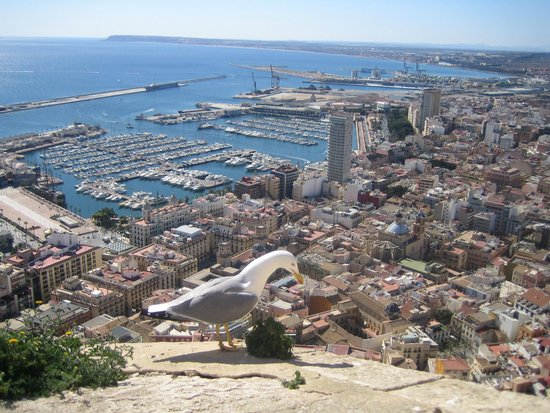 Castle of Santa Barbara: view of Alicante, seagull was there by accident