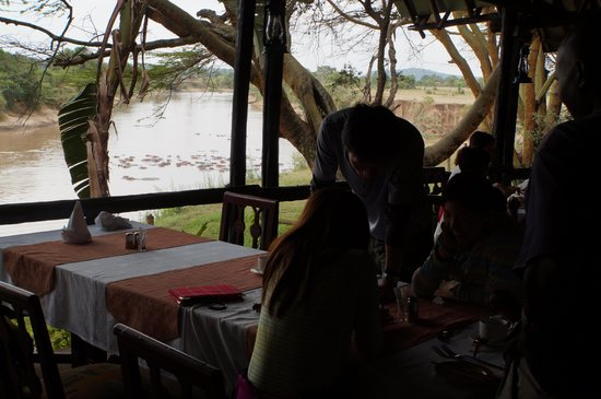 Mara River Lodge: hipos coulud be seen from restaurant