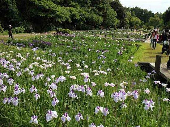 Hamamatsu Flower Park : はままつフラワーパーク4
