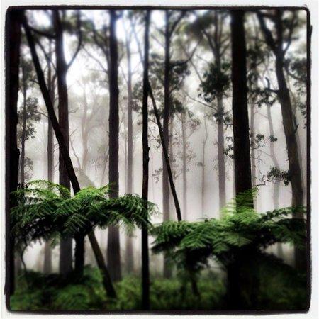 Piaf Day Spa: Misty morning