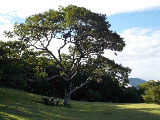 Kyukamura Azumayama-Lodge : 大きな木