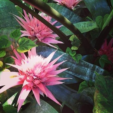 Giardini La Mortella: цветы