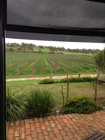 Seppeltsfield Vineyard Cottage: view from the courtyard