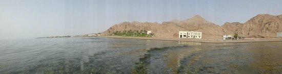 Dahab Paradise: oasis of green
