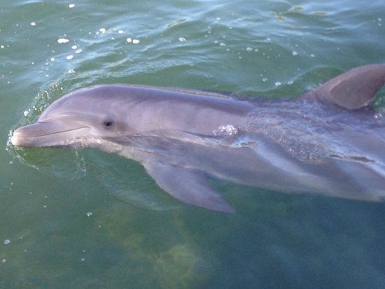 Dolphins Plus - Key Largo: Dolphin Jessica